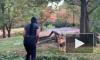 Безрассудное видео из Нью-Йорка: Женщина пробралась в вольер ко льву
