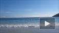 """Сотни дельфинов-""""самоубийц"""" атаковали восточное побережье ..."""