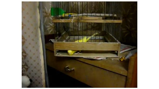 Попугай-хитрец