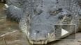 В Праге на улице нашли дохлого крокодила