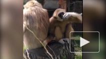 Ленинградский зоопарк показал один день из жизни своих питомцев