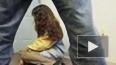 30-летнего педофила задержали за связь с 12-летней ...