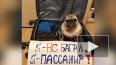 Россияне запустили флешмоб в поддержку животных, летающи...