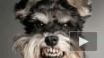 Бездомные псы терроризируют горожан