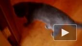 Из жизни кошки Глафиры