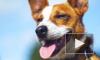 В Гонконге умерла единственная собака с коронавирусом