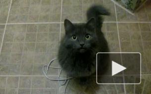 Общительная кошка. Все понимает и сказать может