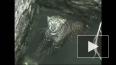 В Индии чуть не утонул леопард