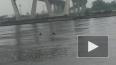 Жара в Петербурге: в Неве купаются лоси