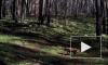 Любопытное видео из Воронежа: лесные животные попали в объективы фотоловушек