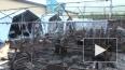 Число погибших детей при пожаре в палаточном лагере ...