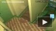 Видео: в Челнах три девочки скинули кошку с 14-го этажа