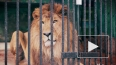 В Ленинградском зоопарке впервые за 20 лет родились ...