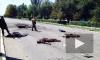Новости Украины: противостояние между Нацгвардией и кадровыми военными достигло предела