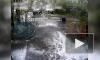 Видео: во дворе на Будапештской упавшее дерево задело 5 машин