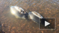 Больше 30 трупов нерп обнаружили под Иркутском