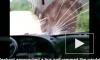 Видео из Китая: Дикий слон напал на автобус и грузовик