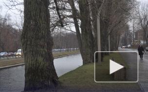 """""""Вырубка деревьев приведет к катастрофе"""": жители Петроградки борются за тополя у набережной реки Карповки"""