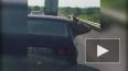 На видео попала свинья катающаяся на авто с ветерком