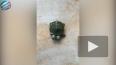 В Таиланде родилась двухголовая черепаха (видео)