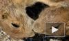 Почему упал казахский тенге: объясняем на сусликах