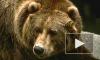 В Якутии медведь пробрался в комнату к женщине и укусил ее
