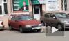 Видео из Ялты: Собака ворует номерные знаки с машин