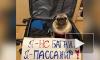 Россияне запустили флешмоб в поддержку животных, летающих в багажном отсеке