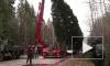 В Петербург прибывает главная елка города