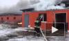 В Подмосковье на пожаре погибли 500 свиней
