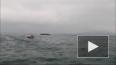 Российский вертолет упал в море около Шпицбергена