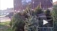Росгвардия поймала петербуржца, срубившего елку в ...