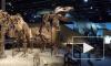 Названа новая причина вымирания динозавров