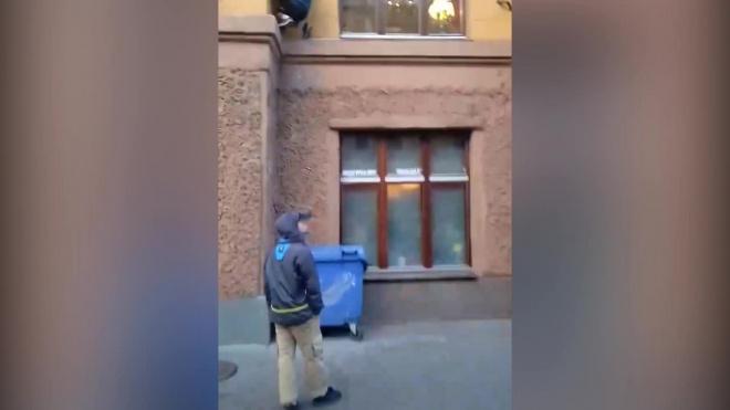 Видео: кота Елисея на Малой Садовой снова ограбили