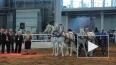 """На """"Иппосфере"""" петербуржцев ждут очаровательные пони"""