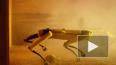 Робопес Boston Dynamics поступил в продажу