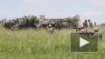 Народная милиция ЛНР: Киев и Луганск развели вооружения ...