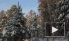 Иркутская модель разделась в лесу для фотосессии с елью