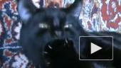 Кот по имени Ням-ням