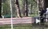 Видео: в Удельном парке пенсионер пытался забить голубей камнями