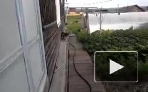 Переноска кота)))