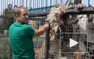 Хозяин крымского сафари-парка жалеет, что тайга не досталась Третьему рейху в 41-м
