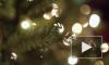 В МЧС рассказали об опасности новогодних елок