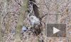В Петербурге мучавшим сов и енотов фотографам выписали максимальные штрафы
