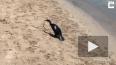 Видео из Австралии: Смертельно ядовитая змея пала ...