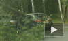 На проспекте Большевиков на машины упало дерево
