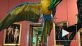 В Эрмитаже поселился крупнейший в мире попугай