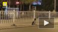 В Китае появился свой Хатико: собака уже три месяца ...