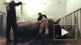 Носорог из цирка на Фонтанке стал звездой инстаграма