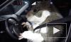 Краш-тест с хомяком за рулем грузовика Volvo сняли на видео